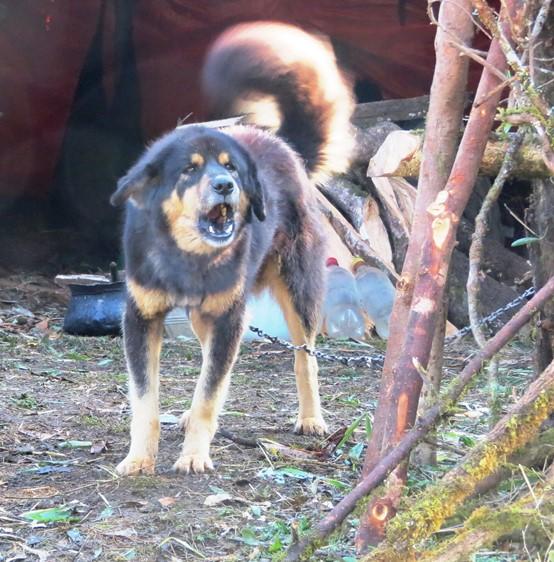 IMG_2912 gothalo's dog