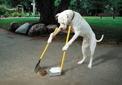doggie-pooper-scooper