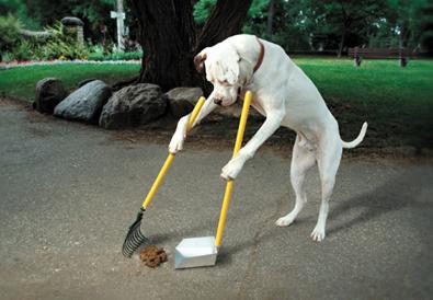 doggie-pooper-scooper